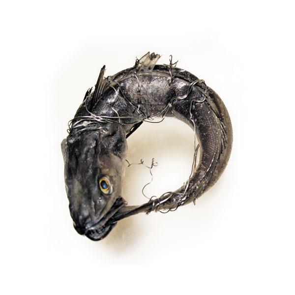 /var (fish).